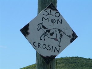 Slo mon cow crossing sign in St. Croix